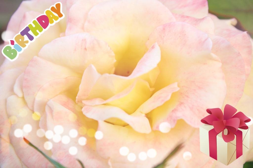 Birthday Horoscope for February 10th